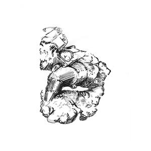 No. 8: White Ginseng